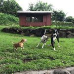 dog boarding maui 4