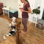 dog boarding maui 19