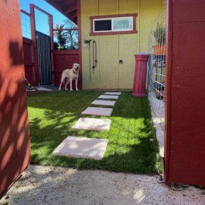 dog yard entrance