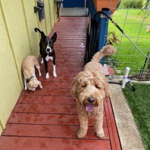 dog boarding side walk